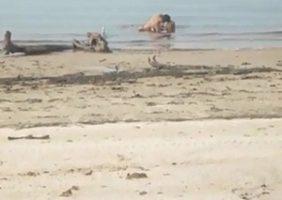 Casal Transando No Mar Deserto São Flagrados Por Curioso Safadão
