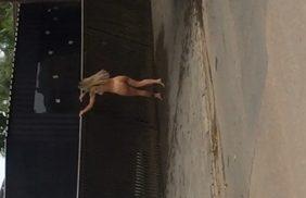 Patricinha Bêbada é Flagrada Completamente Nua Pelas Ruas Do Bairro Onde Mora